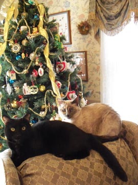 Mei-Lin &amp; Mingtoy Wish You A Merry Cat-mas