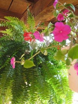 Aunt Jan's Cozy Cabin Bed & Breakfast flowers
