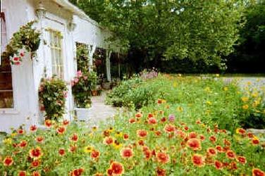 Sulphur Springs Inn flowers