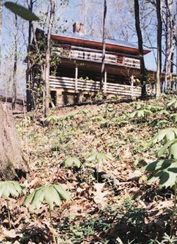 The Cabin at Sassafras Knoll Bed & Breakfast Summer