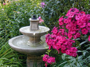 Phlox and fountain