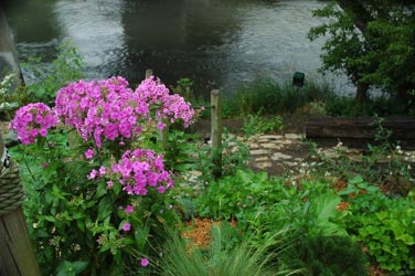 Phlox with View of the River