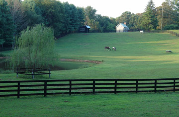 Beautiful Fenced Pastures