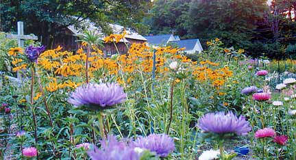 The flower farm is behind the barn