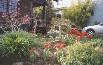 The Hannah-Roy House plants