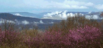 Sky-Vue Lodge plants