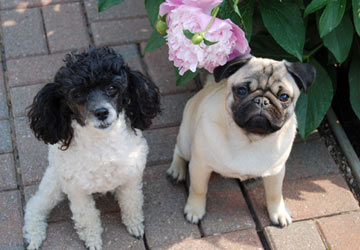 Sophie &amp; Buster want to meet YOU!