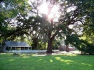 Tranquility  - underneath these centurion live oaks