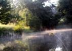 pond-fog-a-054.jpg
