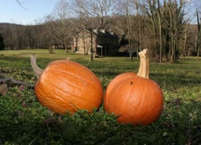 Speedwell Forge B&B pumpkins