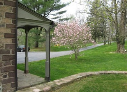 Speedwell Forge B&B pink tree