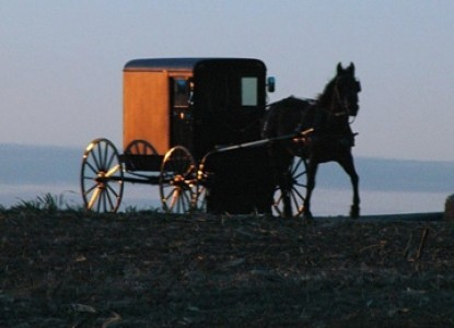 Speedwell Forge B&B wagon and horse