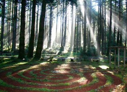 Take A Walk Through The Tranquil Forest