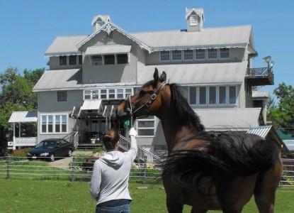 Dream Horse Guesthouse, horses