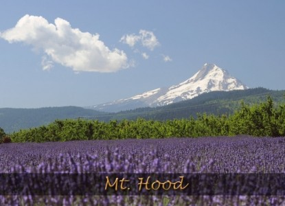 Juniper Acres Bed & Breakfast, Mt. Hood