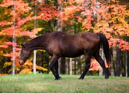 Meadow Farm Bed & Breakfast  horse