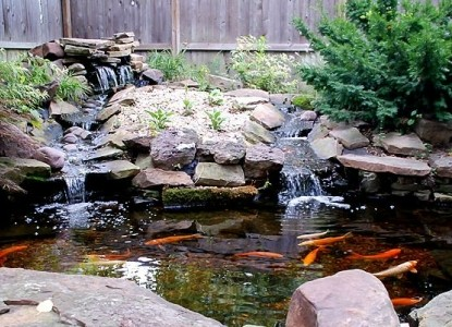 Hayes House Bed & Breakfast-Koi Pond