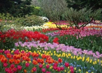 Three Tree Point Bed & Breakfast - Skagit Tulips