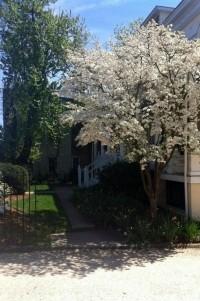 200 South Street Inn white tree