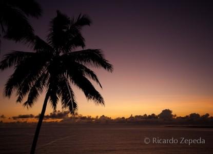 Hale Kai Hawaii Bed & Breakfast palm tree