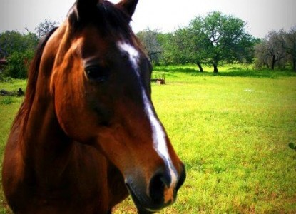 Monarc Ranch horse