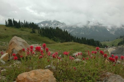 Mt. Rainier Cabins at Three Bears Lodge guest reviews