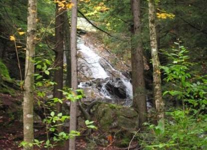 Birch Ridge Inn, forest