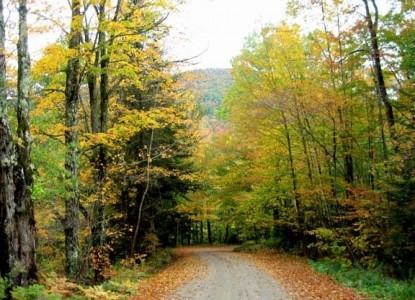 Birch Ridge Inn, trees