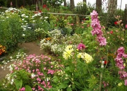 The Lost Whale Bed & Breakfast Inn flowers in the garden