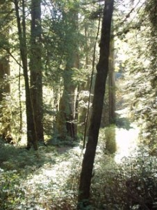 The Lost Whale Bed & Breakfast Inn redwood forest