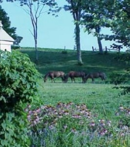 Big Locust Farm Bed & Breakfast animals