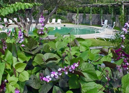 Meyer Bed and Breakfast on Cypress Creek pool