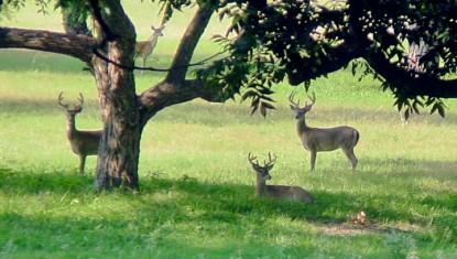 Meyer Bed and Breakfast on Cypress Creek deer