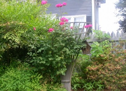 Fuquay Mineral Spring Inn & Garden plants