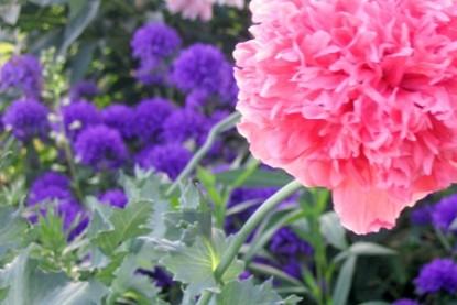 Flowers & Thyme Bed & Breakfast pink flower