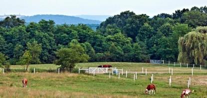 The Inn at Westwynd Farm, horses