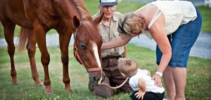 The Inn at Westwyn Farm, horses