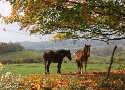 The Barn Inn Bed and Breakfast horses
