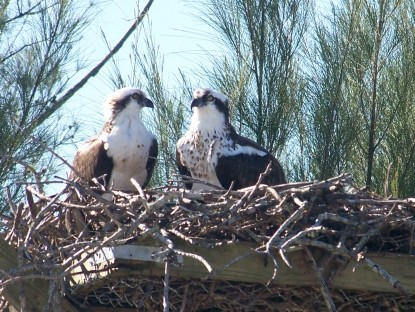 Inn on the Bay bird nest