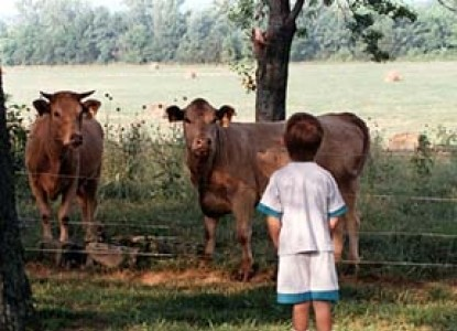 Parish Patch Farm & Inn - Whitney Chapel cows