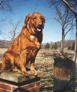 Parish Patch Farm & Inn - Whitney Chapel dog