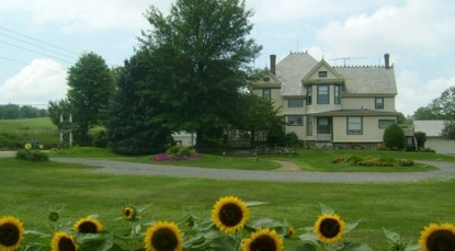 Hasseman House Bed & Breakfast- Sunflowers