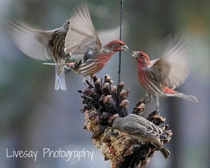 Big Mill Bed & Breakfast birds