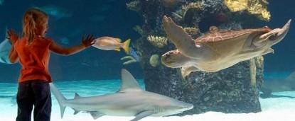 Gateway Bed & Breakfast-Newport Aquarium,