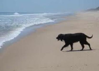 Mill House Inn, beach dog