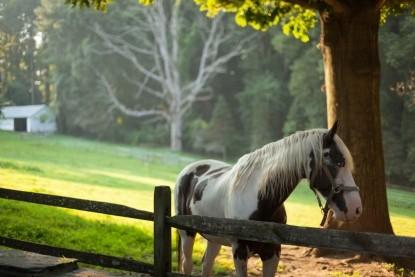 Hamanassett Bed and Breakfast horse
