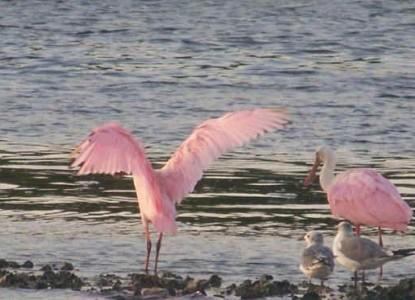 Inn on the Bay pink bird