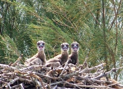 Inn on the Bay nest