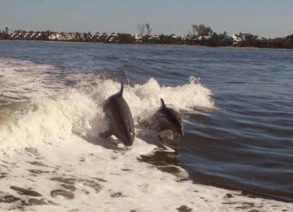 Inn on the Bay dolphins