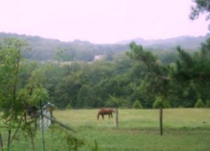 Walnut Hill House B&B Retreat pasture